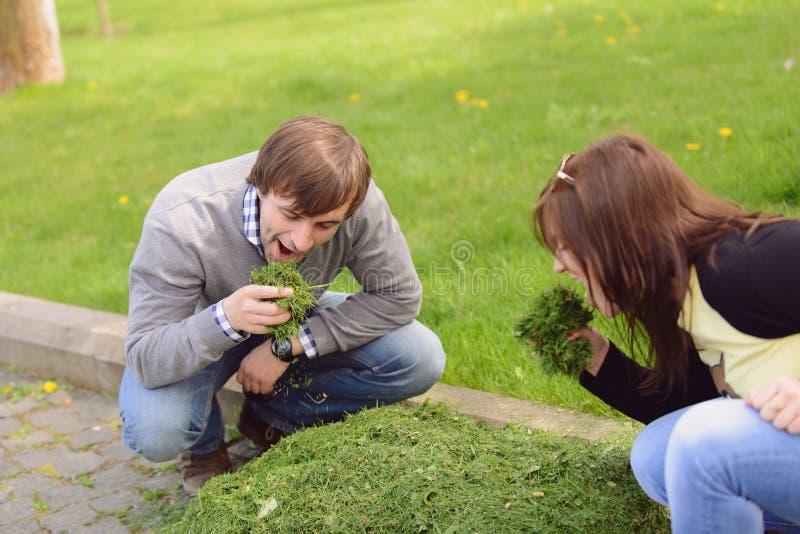 Essen des grünen Grases stockfotos