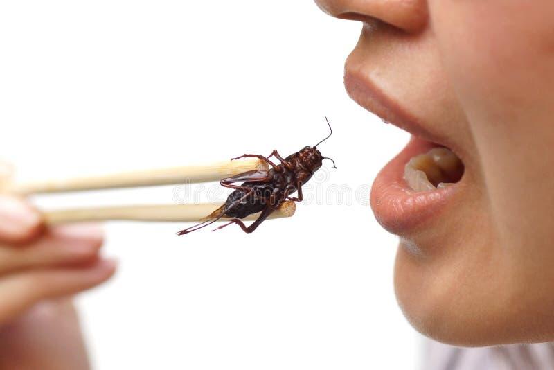 Essen des Insekts stockfotos