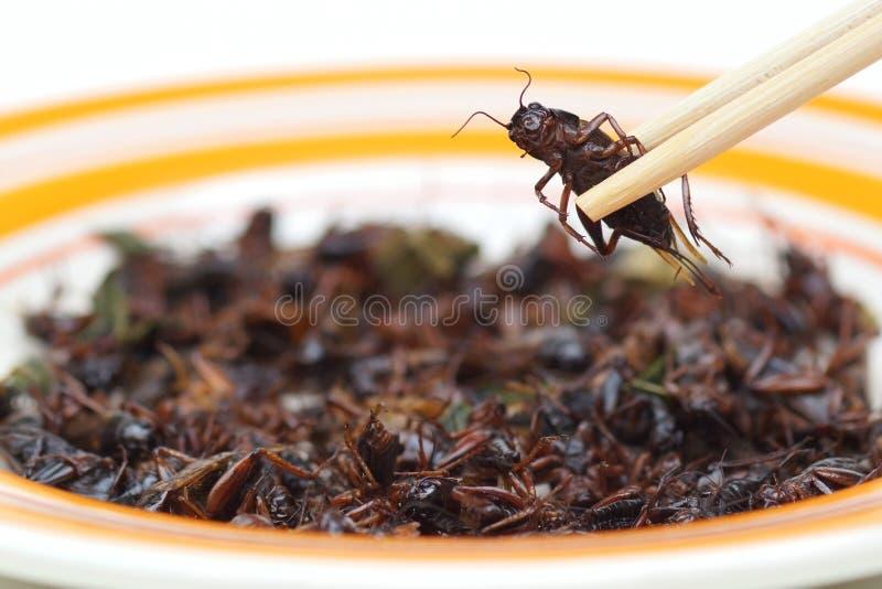 Essen des Insekts stockbilder
