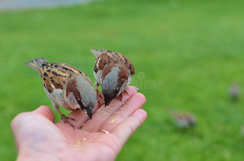 Essen von Vögeln lizenzfreie stockbilder