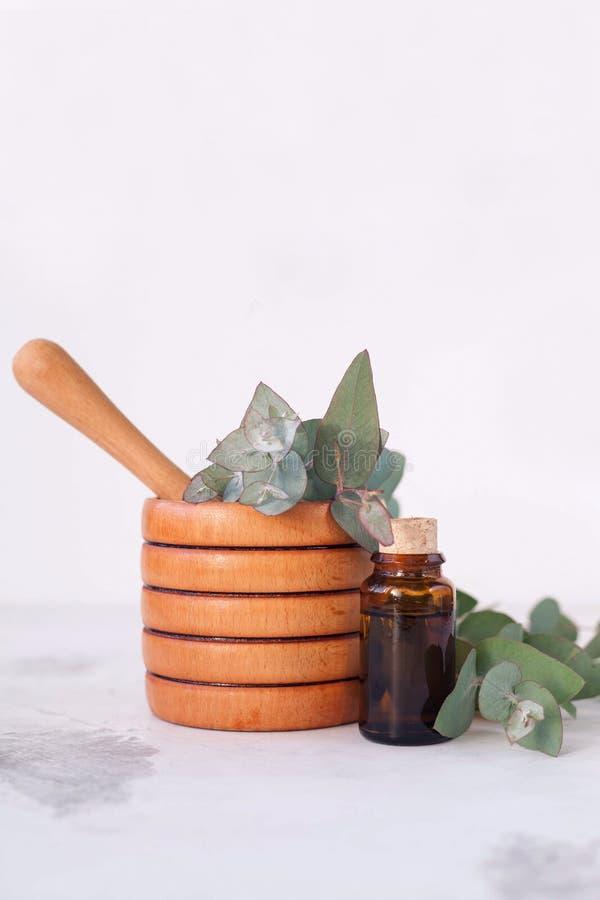 Essence d'eucalyptus image stock