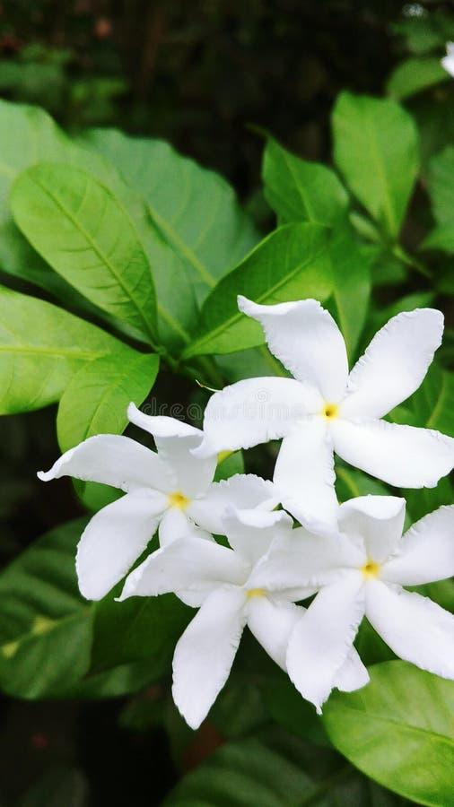 Essence d'orchidée rétablie image stock