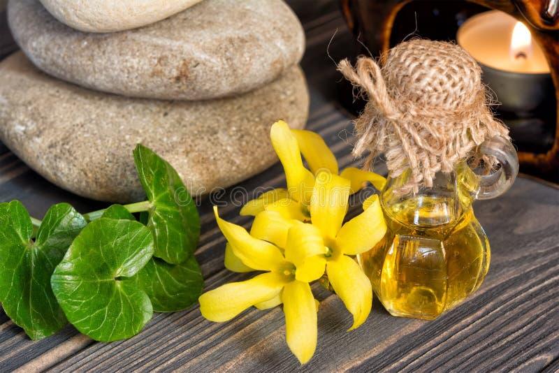 Essence et fleur de forsythia photo stock