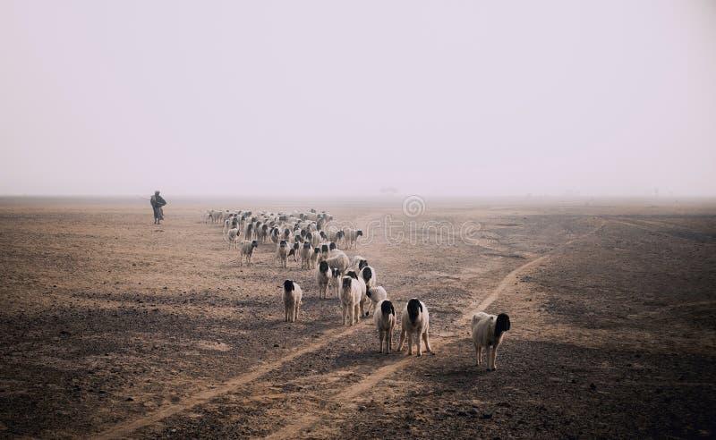 Essendo pastore fotografia stock libera da diritti