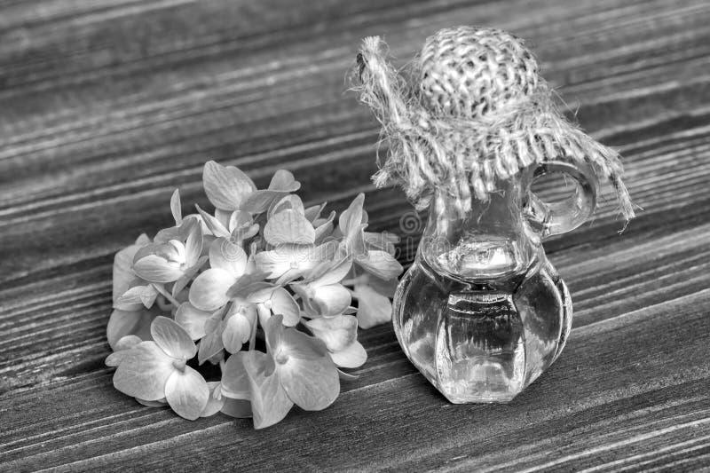 Essentiële hydrangea hortensiaolie royalty-vrije stock afbeelding