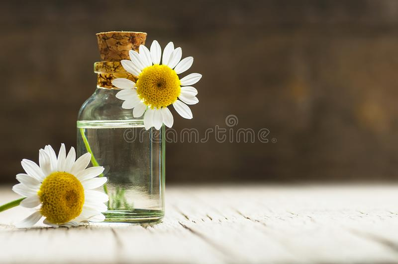 Essential camomile oil in glass bottle with fresh chamomile flowers, fragrant daisy oil, beauty treatment stock photo