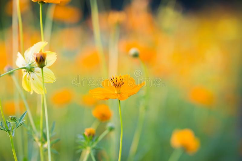 Essential and flower background royalty free stock images