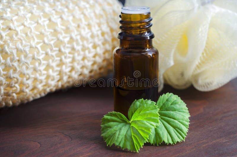 Essential geranium oil stock image