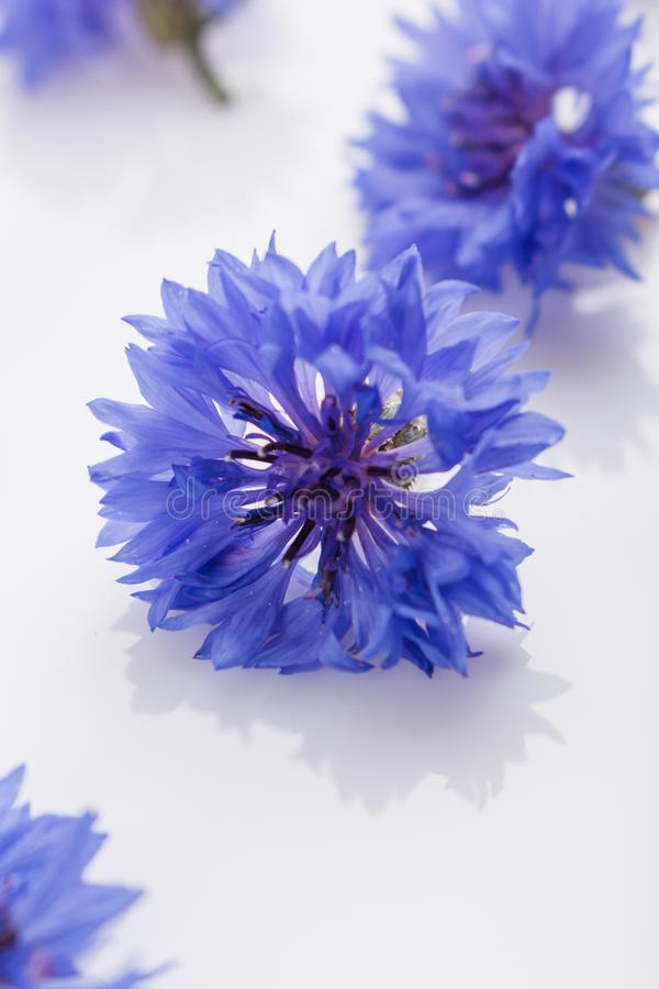 Essential oil of cornflower on a white background stock image