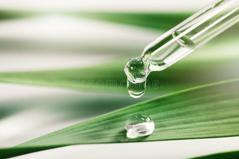 Essential oil drop on green leaf. spa background stock images