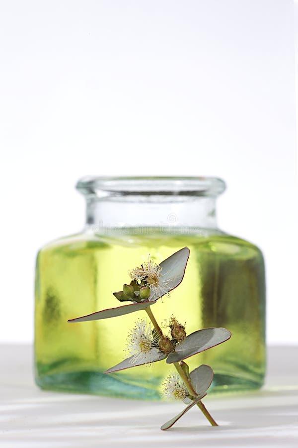 Essential oil of eucalyptus stock photo