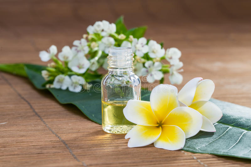 Download Essential Oil, Flower, On Green Leaf, Blur Background, Health Sp Stock Photo - Image of petal, therapy: 55031154