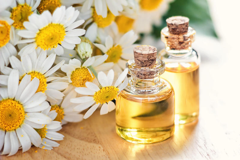 Essential oil in glass bottle with fresh chamomile flowers, beauty treatment. Spa concept. Selective focus. Fragrant oil of chamomile flowers, macro on wooden stock photo