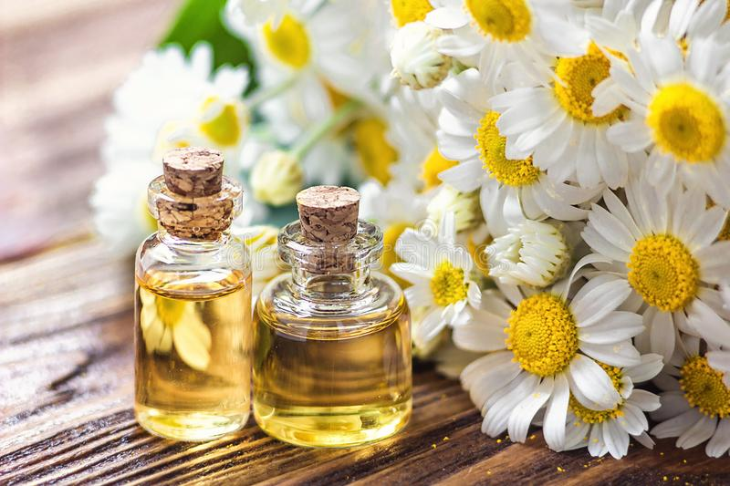 Essential oil in glass bottle with fresh chamomile flowers, beauty treatment. Spa concept. Selective focus. Fragrant oil of chamom stock images