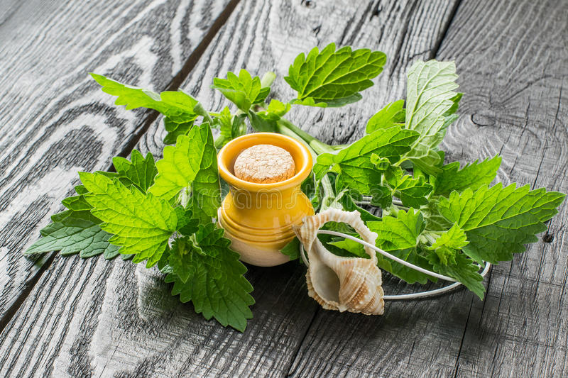 Essential oil of melissa and fresh leaves of melissa stock images