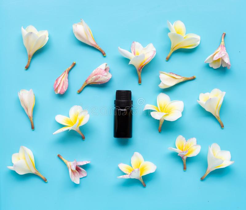 Essential oil with plumeria or frangipani flower on blue background royalty free stock photography