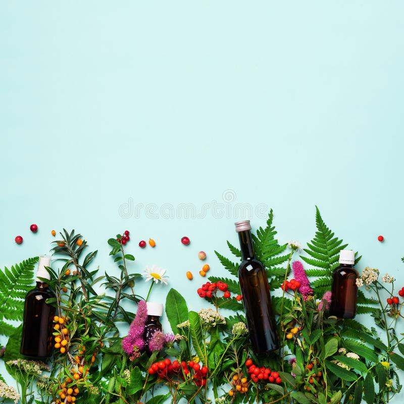 Essential oils in dark glass bottles and healing flowers, herbs on blue background. Holistic medicine approach. Healthy food royalty free stock images