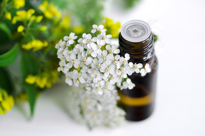 Essential yarrow oil royalty free stock photo