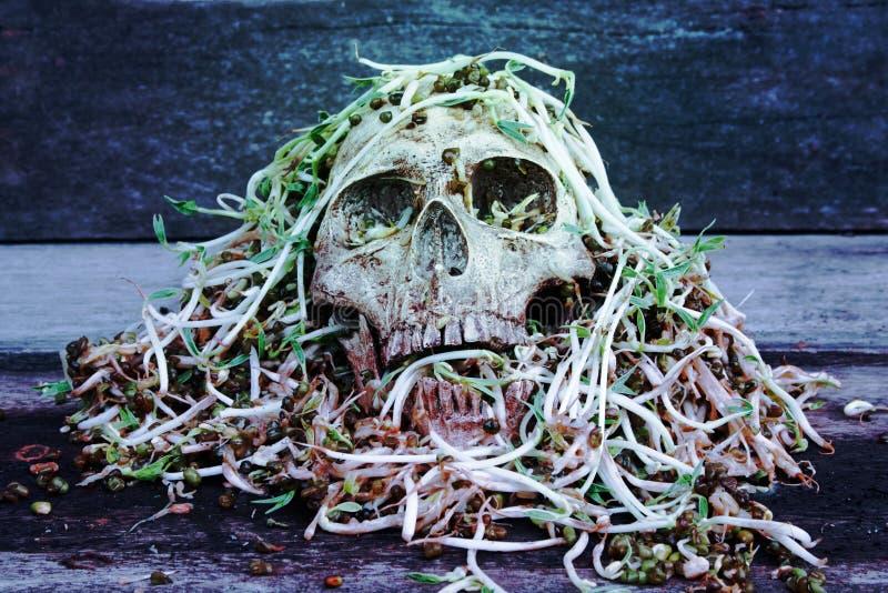 Essere umano del cranio di morte con il grande movimento strisciante della lumaca sullo spro del fagiolo della putrefazione e del fotografia stock