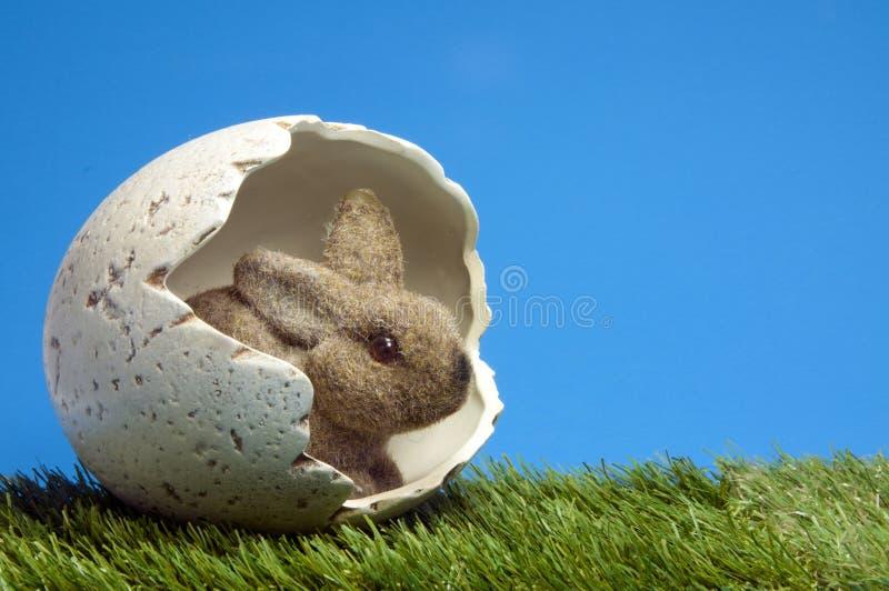 Esserhäschen innerhalb des Eies lizenzfreies stockbild
