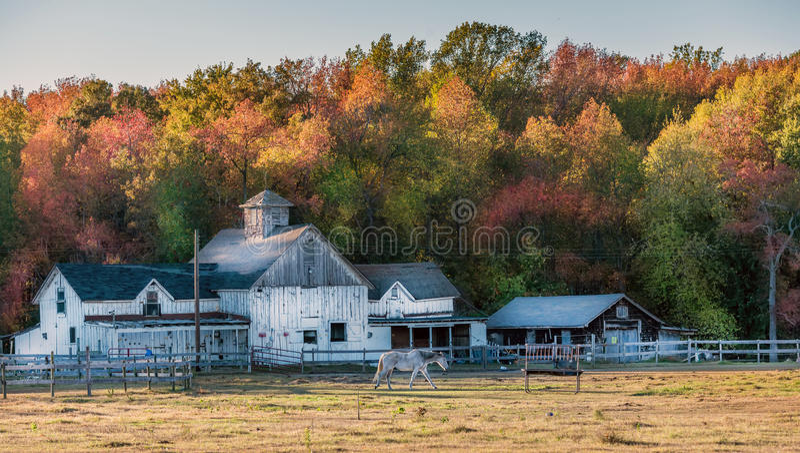 Estábulo de Maryland com o celeiro rústico velho durante o outono fotografia de stock royalty free