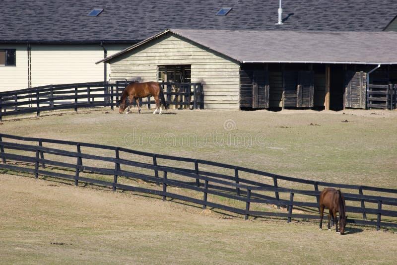 Estábulos do cavalo imagem de stock royalty free
