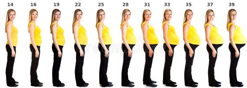 Estágios da gravidez imagem de stock