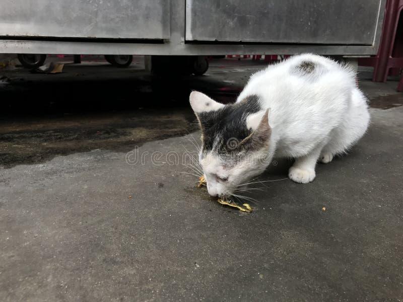 Estática com fome Cat Eating Off The Street fotografia de stock royalty free