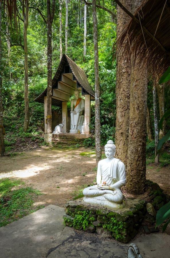 estátua buda na selva, Wat Palad, Chiang Mai, Tailândia fotos de stock royalty free