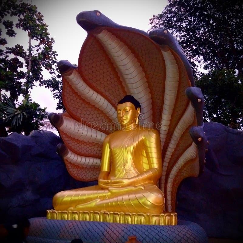 Estátua do ouro da Buda protegida pela serpente sete principal foto de stock royalty free