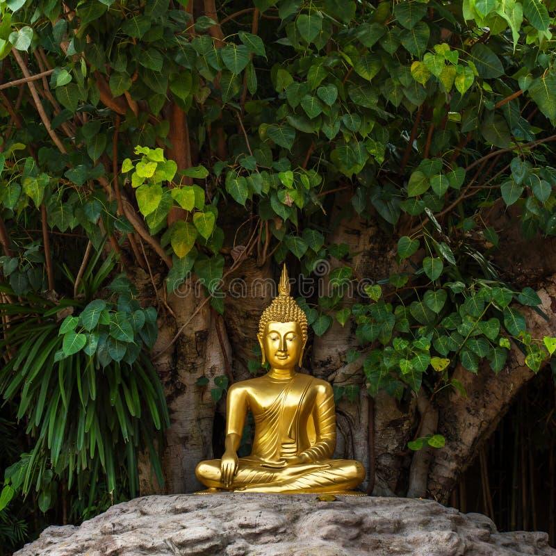 Estátua dourada da Buda no templo de Wat Phan Tao foto de stock royalty free