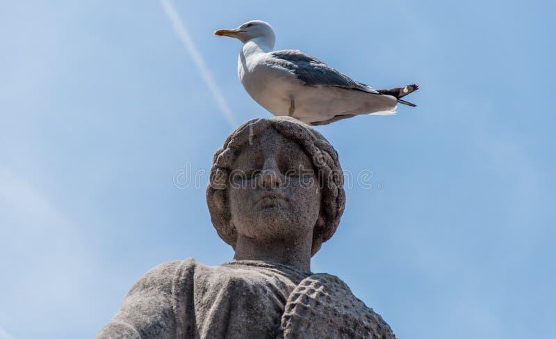 Estátua e uma gaivota fotos de stock