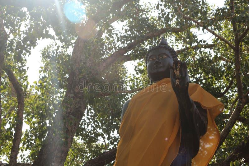 A estátua ereta da Buda com luz ensolarada imagens de stock