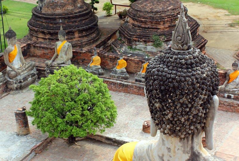 Estátuas antigas de meditar buddha que sentam-se, no templo velho de Wat Yai Chaimongkol em Ayutthaya, Tailândia fotos de stock royalty free