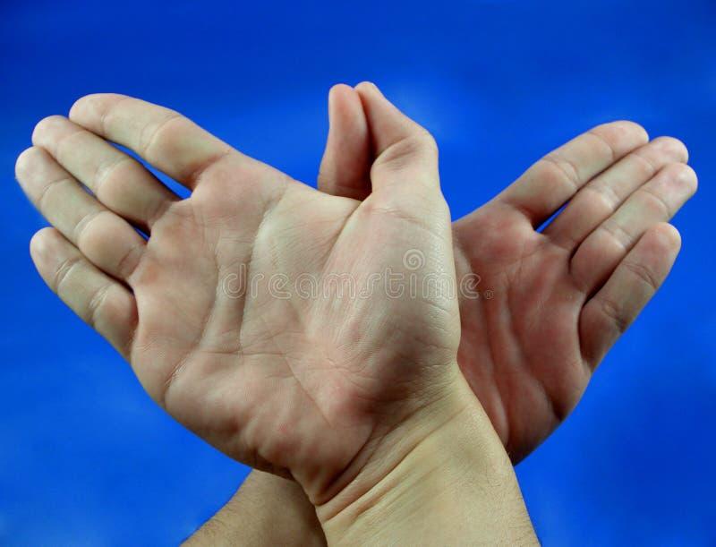 Estão Aqui Duas Mãos Como Um Pássaro Imagem de Stock Royalty Free