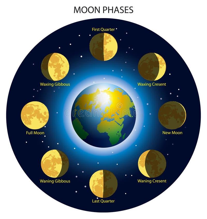 Esté en la luna las fases ilustración del vector