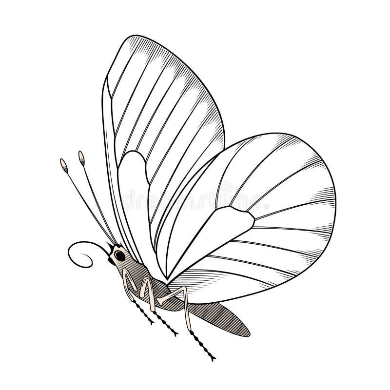 Estêncil da borboleta que tira à mão - para o estoque ilustração stock