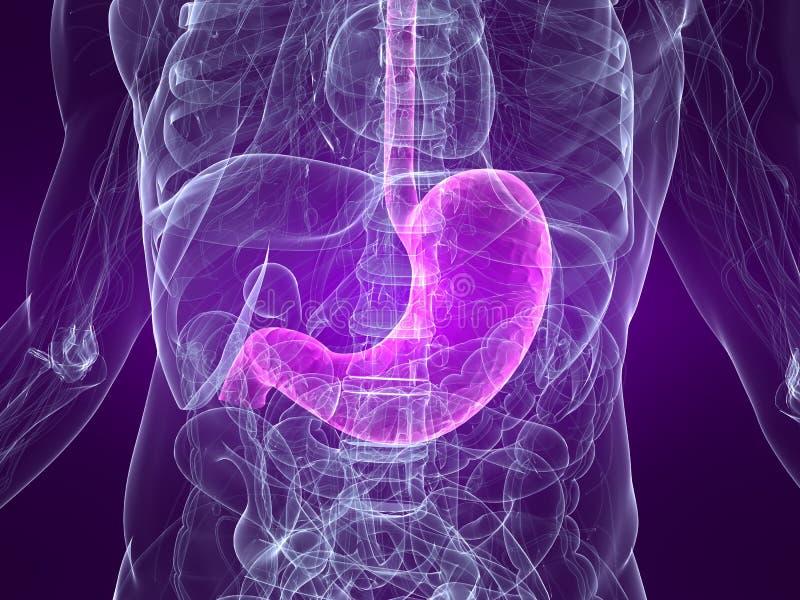 Estómago destacado ilustración del vector