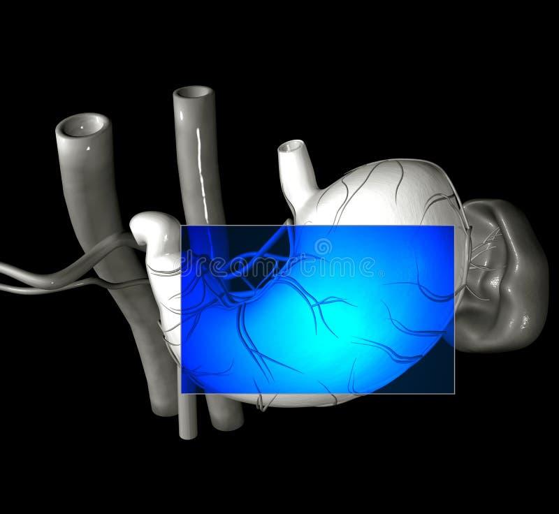 Estômago MRI ilustração stock