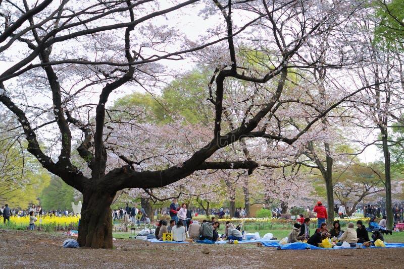 Estação da cereja da flor em Tokyo imagens de stock