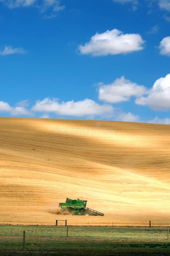 Estação da colheita fotos de stock