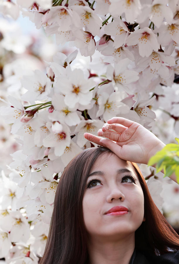 Estação da flor de cerejeira foto de stock royalty free