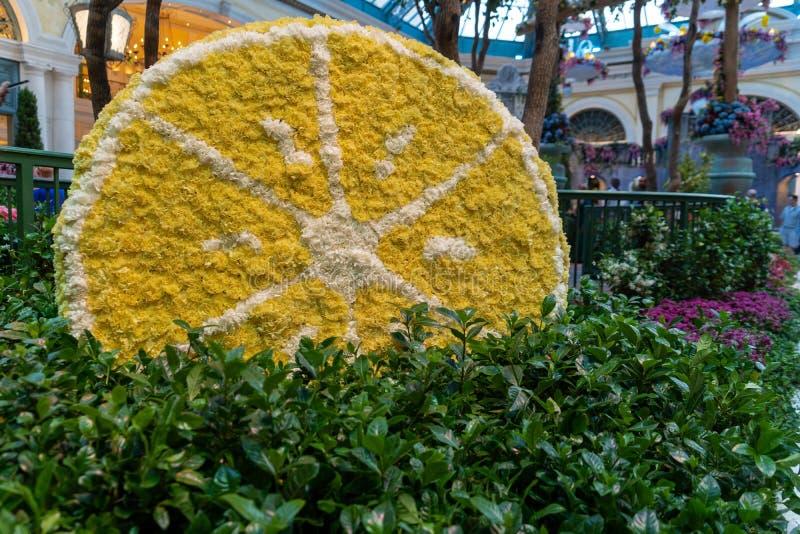 Estação da flor do verão no conservatório do hotel de Bellagio & em jardins botânicos em Las Vegas fotografia de stock