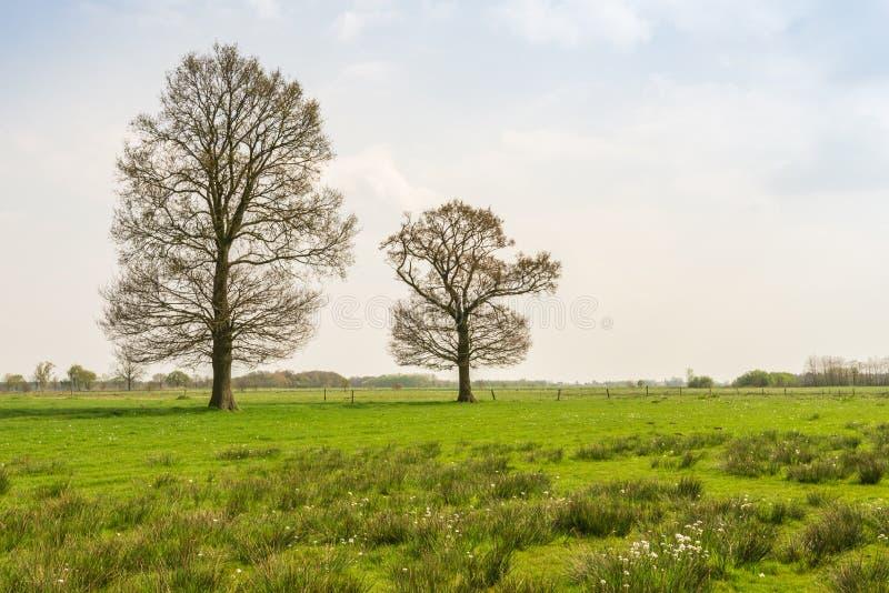 Estação de brotamento de duas árvores na primavera fotografia de stock royalty free