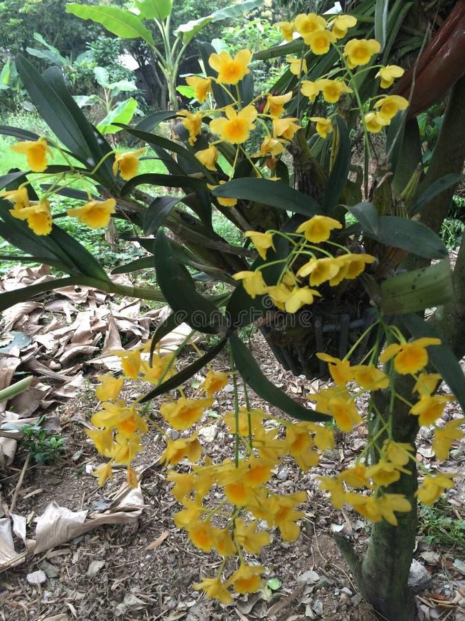 estação de florescência da orquídea fotos de stock royalty free
