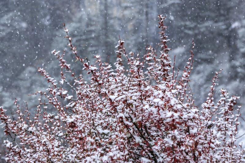 Estação de surpresa do inverno na reserva natural de Yading em Sichuan, China imagens de stock