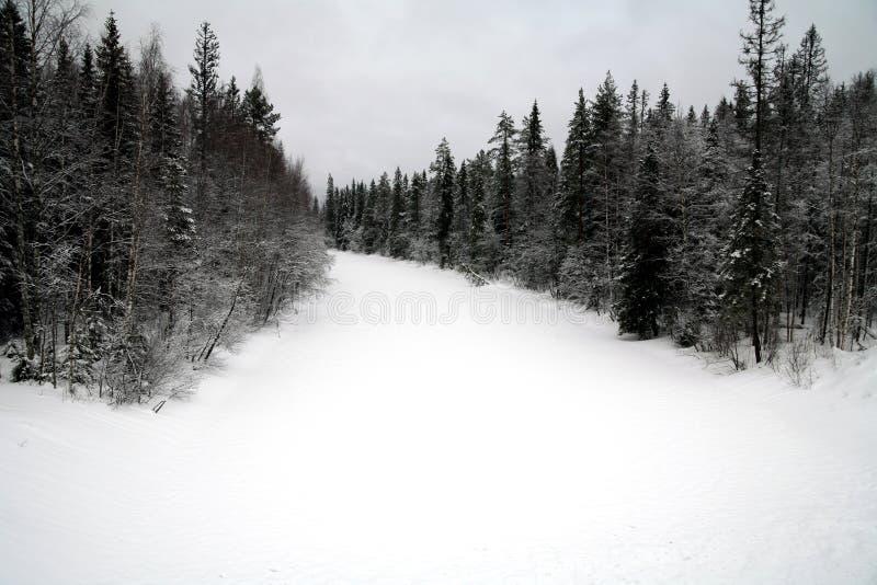 Estação do inverno na floresta foto de stock royalty free