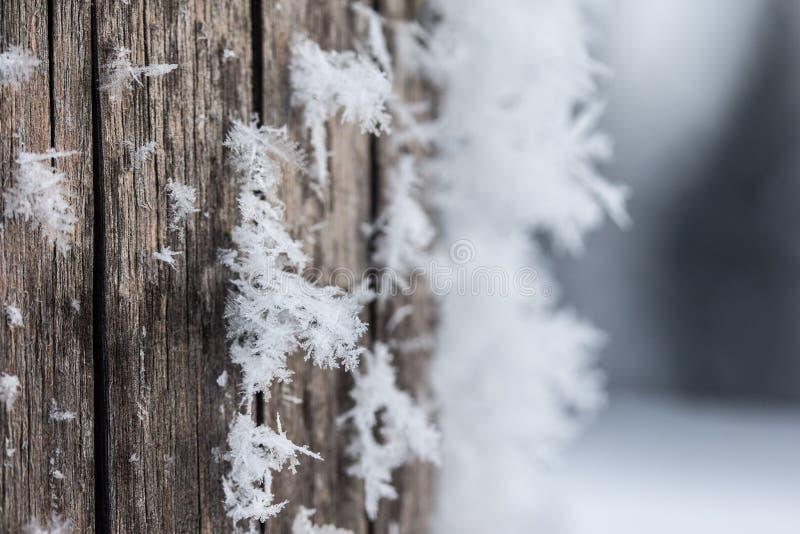 Estação fria do inverno: Feche acima de um floco de neve em uma agulha da madeira foto de stock