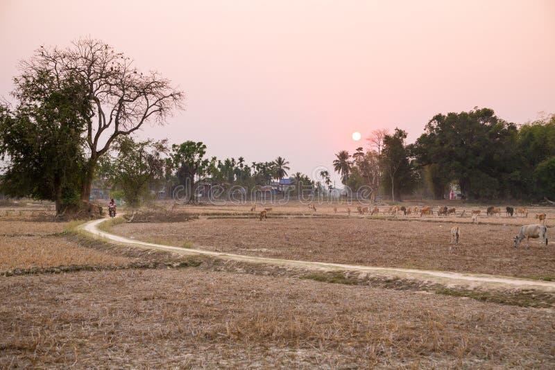 Estação seca em Ásia imagem de stock royalty free