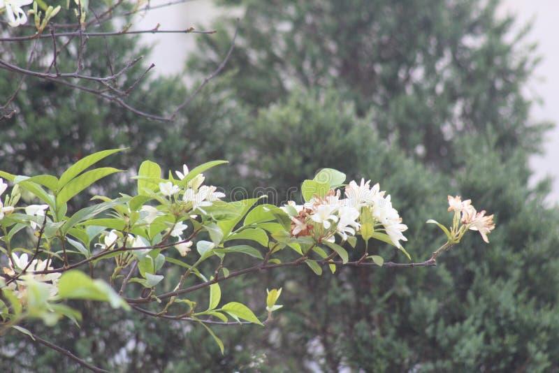 Esta é flor branca esta é flor surpreendente imagens de stock royalty free